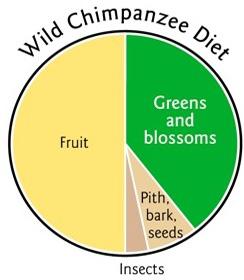 chimp-pie-chart1