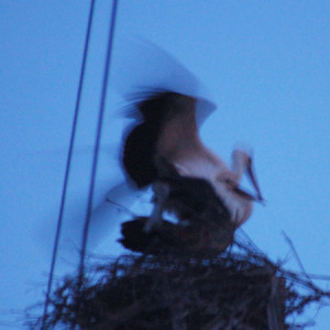 """Josh Brazier explores, """"What-does-the-stork-bring?"""""""